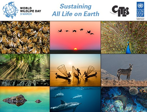World Wildlife Day 2020 Sustaining all life on Earth